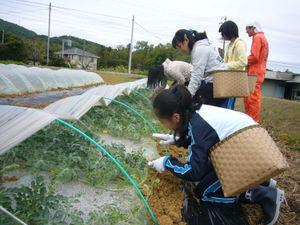 【3期スイカP】椙山女学院のみなさんが食農体験!